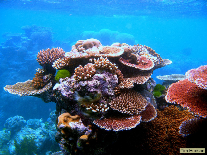 """So long, and thanks for all the fish"" … the end of coral reefs?"